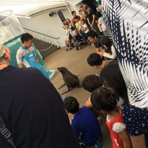 京都水族館 アシカ
