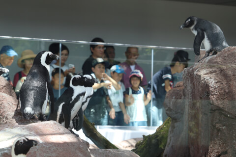 京都水族館_ペンギン