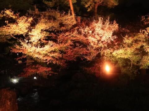 梅小路公園の紅葉祭り