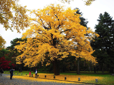京都御苑 秋