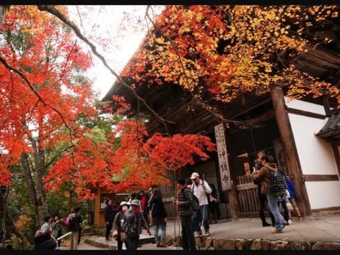 高雄山神護寺(たかおさんじんごじ)