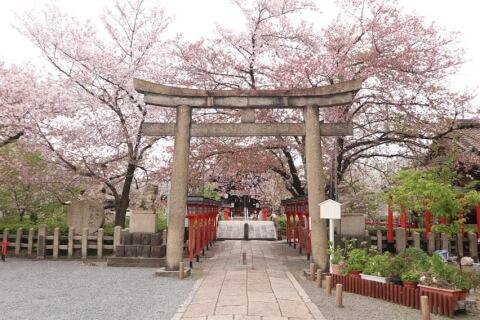 六孫王神社内の桜