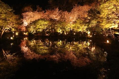 瓢箪池に映る桜