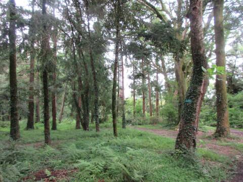 半木の森 京都府立植物園