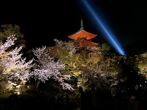清水寺の夜桜