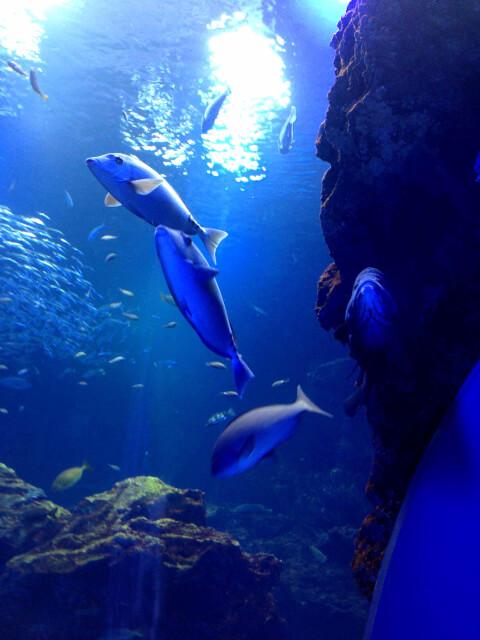 京都市立水族館