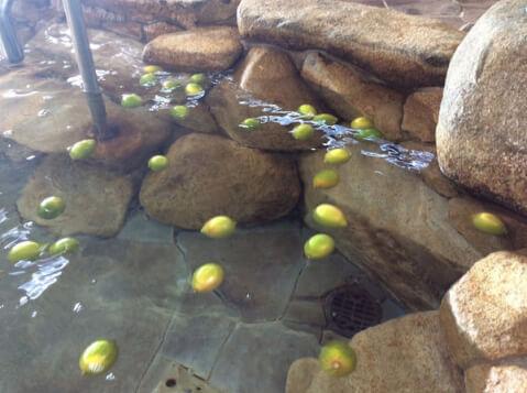 lemon_bath