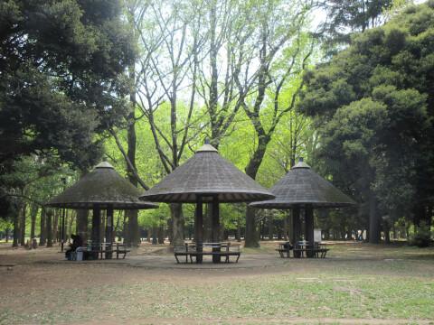 代々木公園 森林
