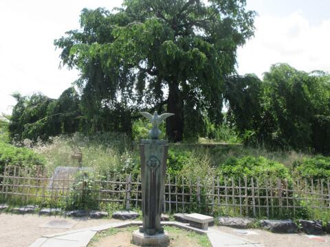 枝垂れ桜 日本庭園