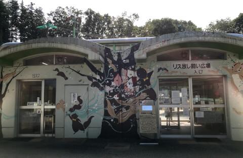 町田リス園_リス放し飼い広場