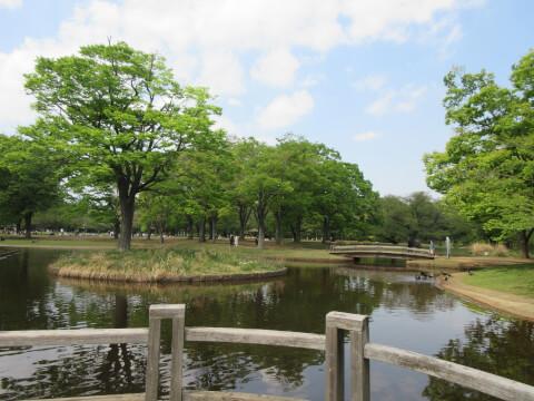 代々木公園 池