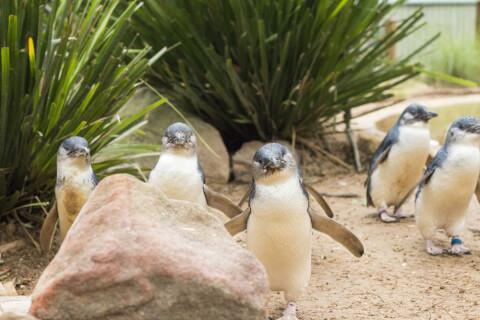 フィリップ島自然公園