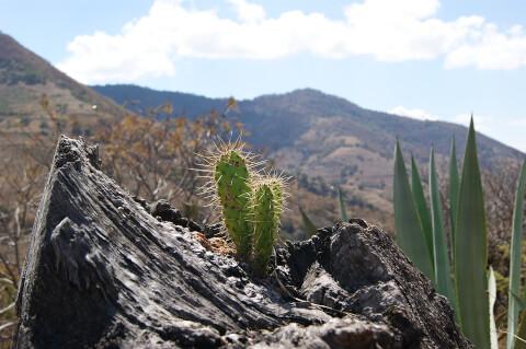 メキシコ メキシコシティ サボテン 高地