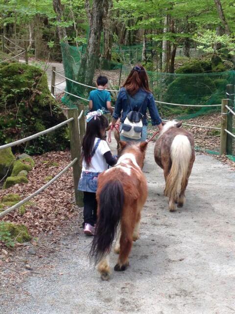 mini_horse