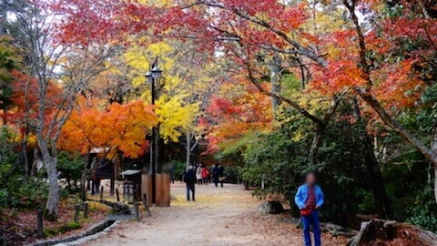 紅葉谷公園
