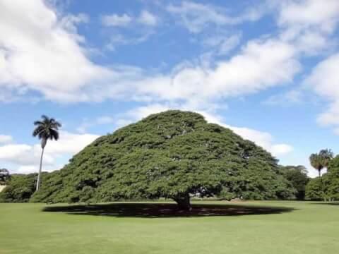 moanaluagarden