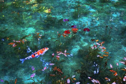 日本 絶景 岐阜 モネの池