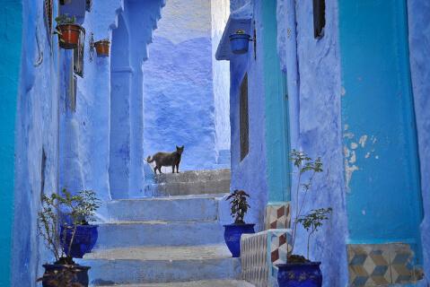 morocco-cat4