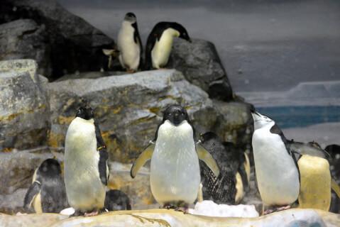 横並びのペンギン3匹