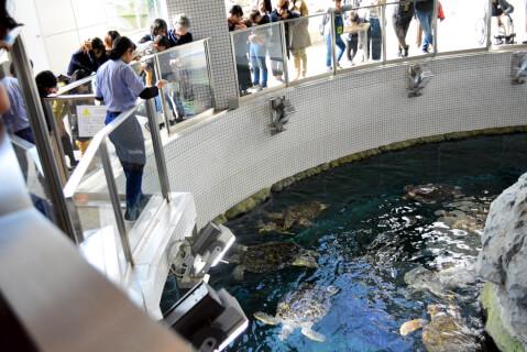 ウミガメ回遊水槽フィーディングタイム