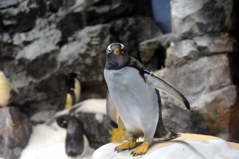 こちらを見るペンギン1羽