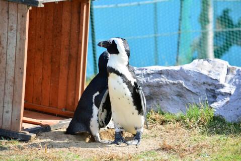 芝生の上のペンギン