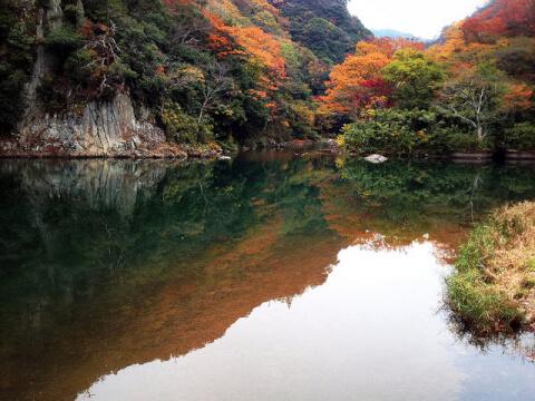 ryousokuji-momiji
