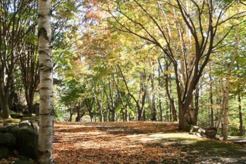 中富良野森林公園_富良野