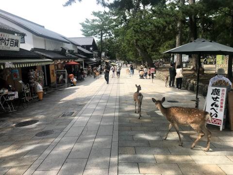 奈良公園の見どころ