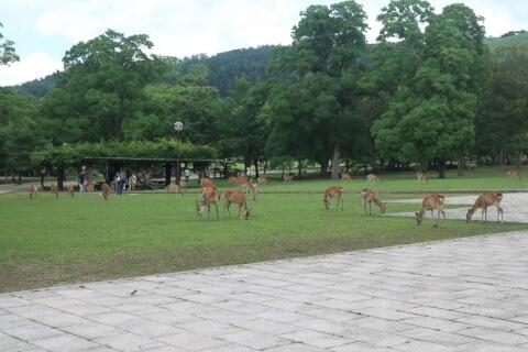 奈良公園の概要