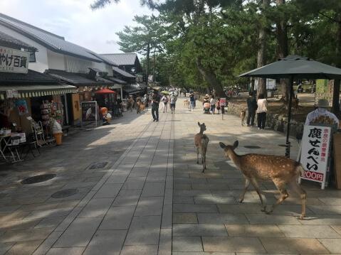 奈良観光のモデルコース