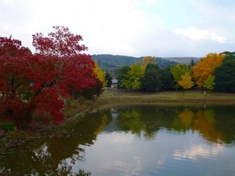 奈良公園 池