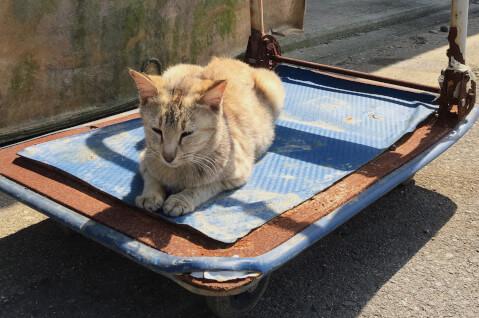 全国の猫島、男木島