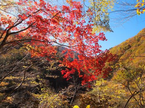 紅葉の西沢渓谷