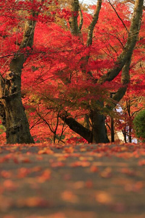 西山公園の紅葉