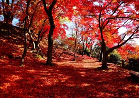 尾関山公園 紅葉