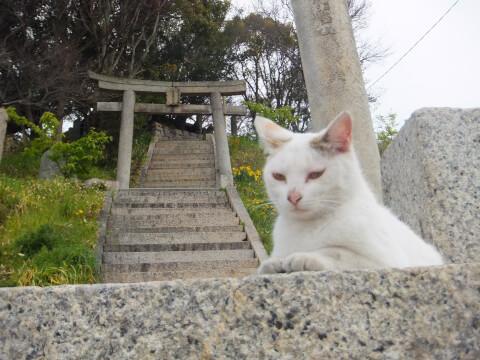 ogijimaneko