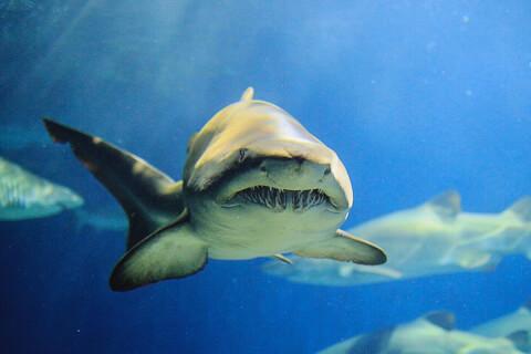 サメ アクアワールド大洗