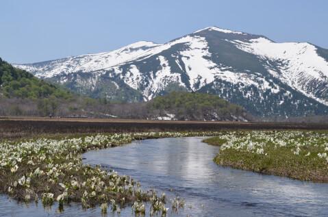 日本 絶景 群馬 尾瀬ヶ原 水芭蕉