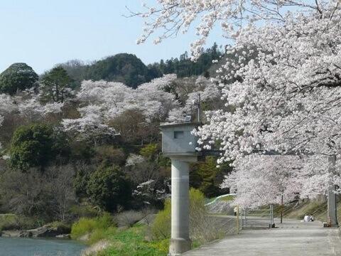 尾関山公園_桜