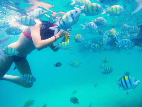 タイ ピピ島 ダイビング