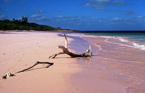 ピンクサンドビーチ