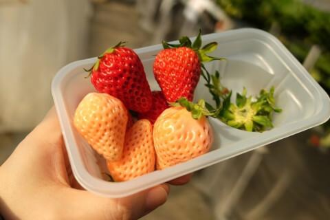 redandwhitestrawberrys