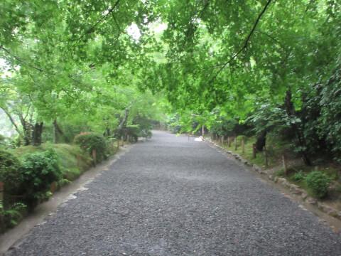 竜安寺 森林