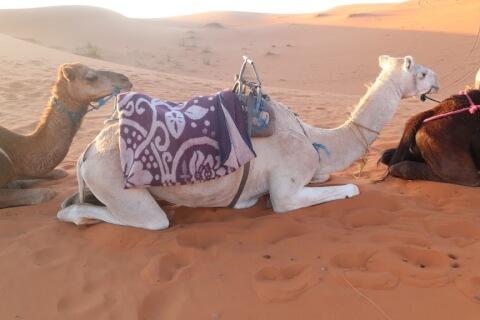 サハラ砂漠とは