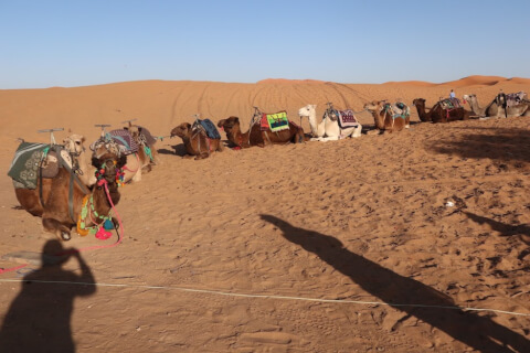 サハラ砂漠の楽しみ方