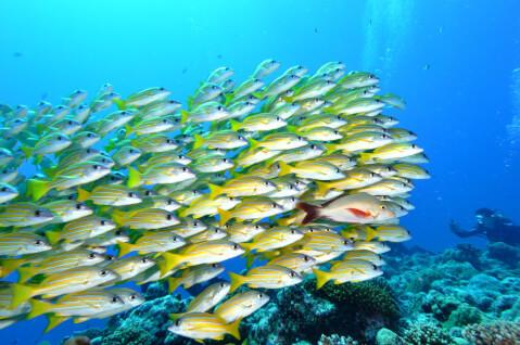 パラオ 海 魚