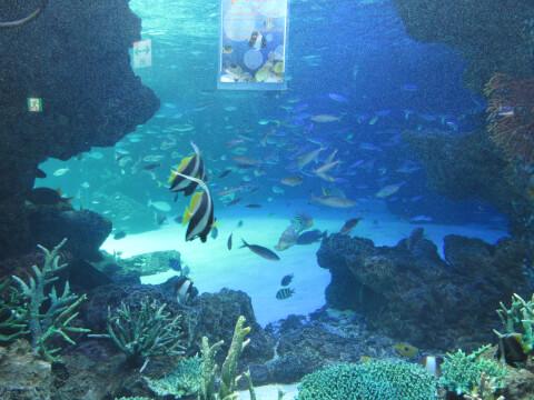 サンシャイン水族館 魅力