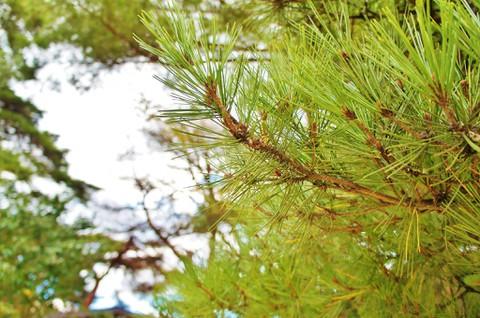仙台:日本三景の一つである松島4