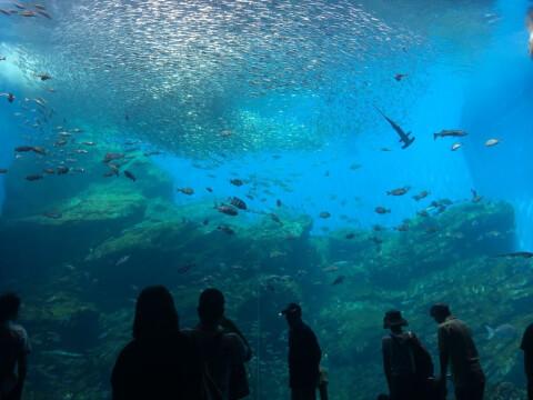仙台うみの杜水族館